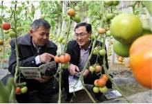 农业技术推广咨询服务